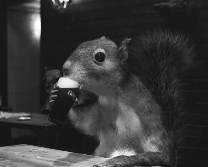 Guiness-Squirrel